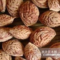 供应桃核种子|桃树种子|桃苗种子