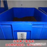 江苏红叶小檗种子最新报价