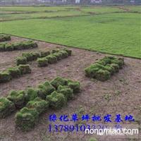 绿化草坪批发基地 郴州草坪价格 大量供应绿化草坪