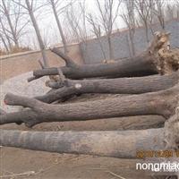 供应国槐树 皂角树