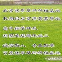 大兴草坪销售 延庆草坪销售 绿化
