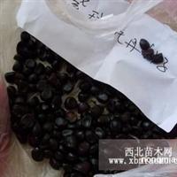 2012年牡丹种子最新价格
