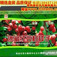 红豆杉种植栽培养殖方法技术