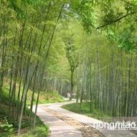 枇杷,刚竹,紫竹,箬竹,湿地松,华山松,黑松,塔柏,蜀桧