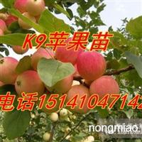 辽宁果树苗(123果树苗 寒富果树苗)