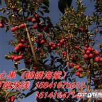 东北较大123果树苗基地热卖123果树苗