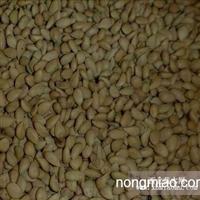 供应枳壳种子广西枳壳种子/酸柑种子/广西酸柑种子/罗汉松种子