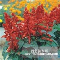 赤峰草花种子。赤峰草花种子价格,赤峰花种子