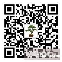 水翁、铁刀木、黄花槐、大叶榕、高山榕、小叶榄仁