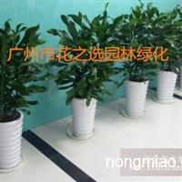 广州花草花木租摆花卉盆栽出租绿化养护