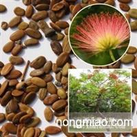 沭阳批发合欢种子带刺银合欢种金合欢树种大量批发