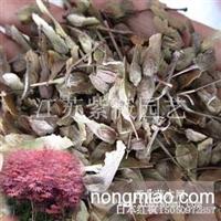 日本红枫种子又名红叶羽毛枫种子江苏低价批发红枫树种子