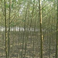 速生柳米径1-4了厘米.高1.5-8米204亩