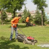 郴州绿化草坪价格及行情