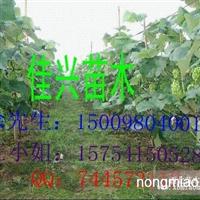 出售各种葡萄苗 15754150528 王小姐