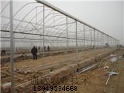 建造花卉温室玻璃温室阳光板温室造价