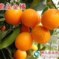 常德树人公司供应金橘种苗