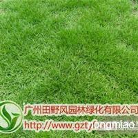 供应优质草坪草种―马尼拉草