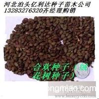 合欢种子多少钱一斤