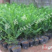 长期供应各类苗木花卉