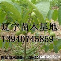 辽宁核桃树苗,营口核桃苗,新品种核桃苗,薄皮核桃苗8518