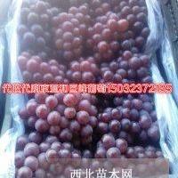 各种规格葡萄树苗;果树苗及绿化苗木等代收葡萄
