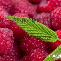 双季树莓苗 秋福