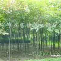 供香樟、榉树、无患子、栾树、合欢、垂柳、枫杨