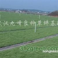销售武汉草坪、草种