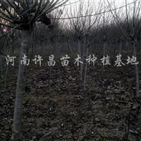 供应红叶桃、绛桃、满天红、珍珠梅、榆叶梅、栾树