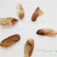 供应香椿种子