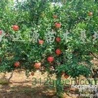 供应3、4、5、6公分苹果树