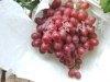 供应辽峰葡萄苗、青提葡萄苗、小蜜蜂葡萄树苗等苗木