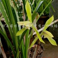 供应兰花及其他稀有植物