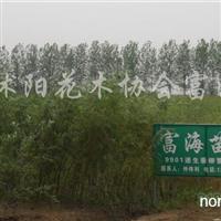 供应3cm---5cm柳树30万棵