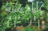 供应绿桂、珍珠彩桂、五色赤丹、银边彩桂、花迪斯