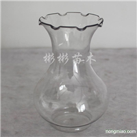 供应风信子种球专用花瓶