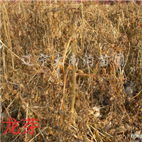 供应五味子、刺嫩芽、五角枫、落叶、白榆、红松