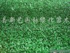 供应草坪马尼拉、百摹大、天堂草