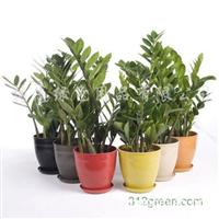 供应植物秸秆花盆