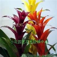 绿植租摆、花卉租摆、鲜花花钵、商务会议桌花租赁