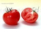 供应蕃茄专用膜