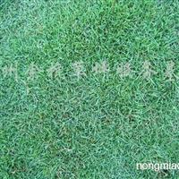 供应质优的马尼拉草坪