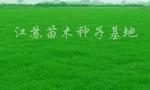 供应优质百喜草、马尼拉、白慕大、弯叶画眉草