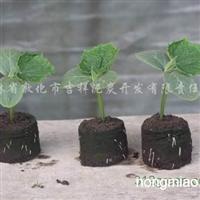 供应创新型泥炭育苗营养块