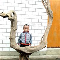 供应侏罗纪根雕