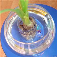 供应水培花卉容器