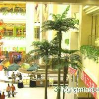 供应椰子树