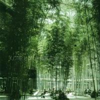 供应仿真竹林.人造树仿真树.仿真植物人造植物.假树