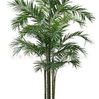供应仿真凤尾葵.仿真植物.人造植物.人造树.仿真树